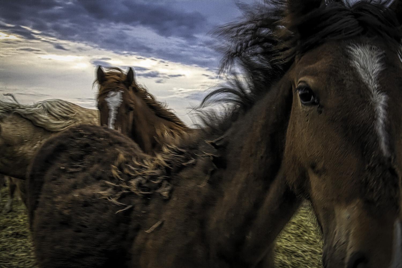 Photographe indépendante, Melissa Farlow a contribué à la revue National Geographic pendant plus de 20 ans. Ellea aussi été photographe au Louisville Times dans le Kentucky. Elle a fait partie d'une équipe qui a remporté un prix Pulitzer...  Lire la suite